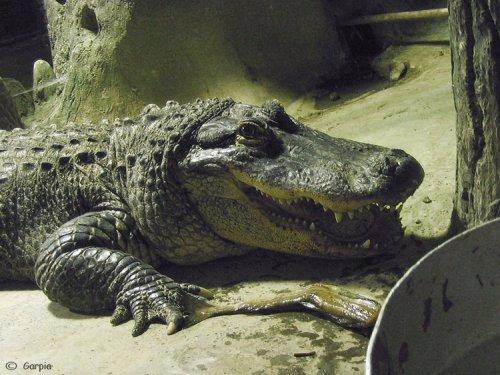 Веселый крокодил