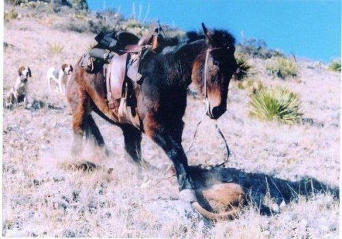 Храбрый мул