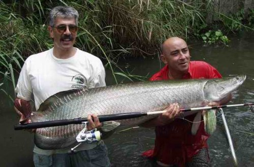 Самая крупная пресноводная рыба