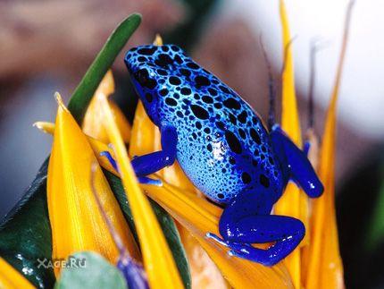 Цветные лягушки оказывается они не