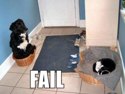 Собаки-лузеры