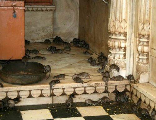 Karni Mata - храм крыс