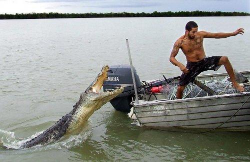 Атака крокодила