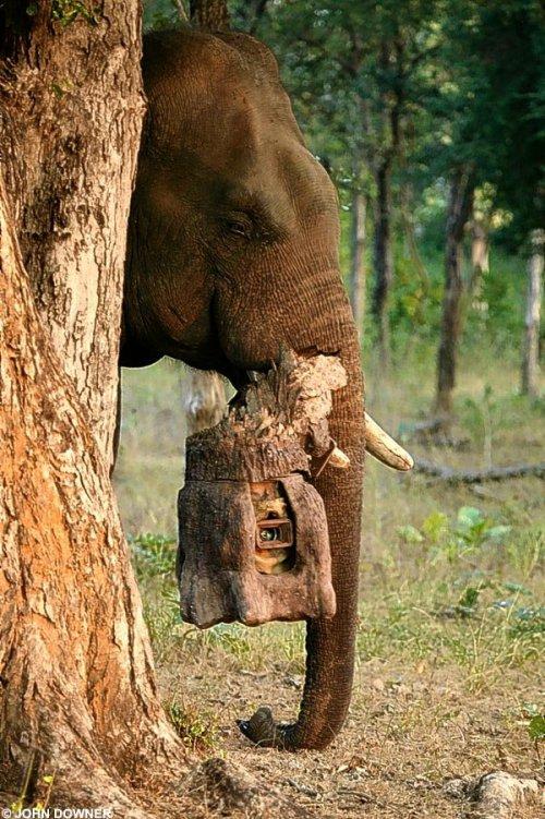 Слон-шпиён