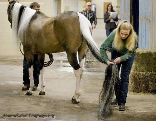 Самый длинный лошадинный хвост