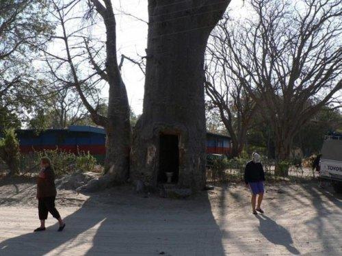 Дерево-клозет