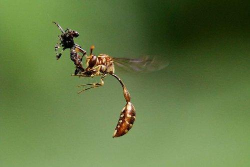 Смерть насекомого