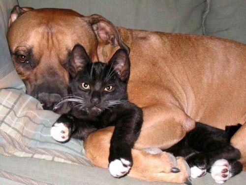 Как кошка с собакой :))