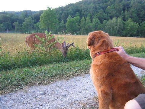 Встреча с диким зверем