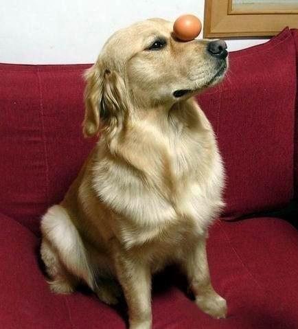 Пес-эквилибрист
